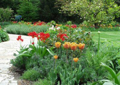 Tulpen und weitere schöne Blumen im Garten